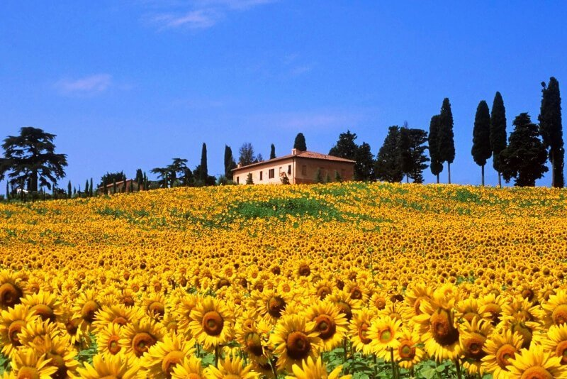 4 experiences to have in Siena